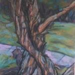trees -5